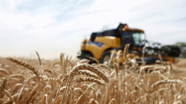 روسيا تحقق قفزة في صادرات القمح